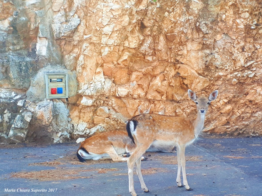 zoo safari fasano