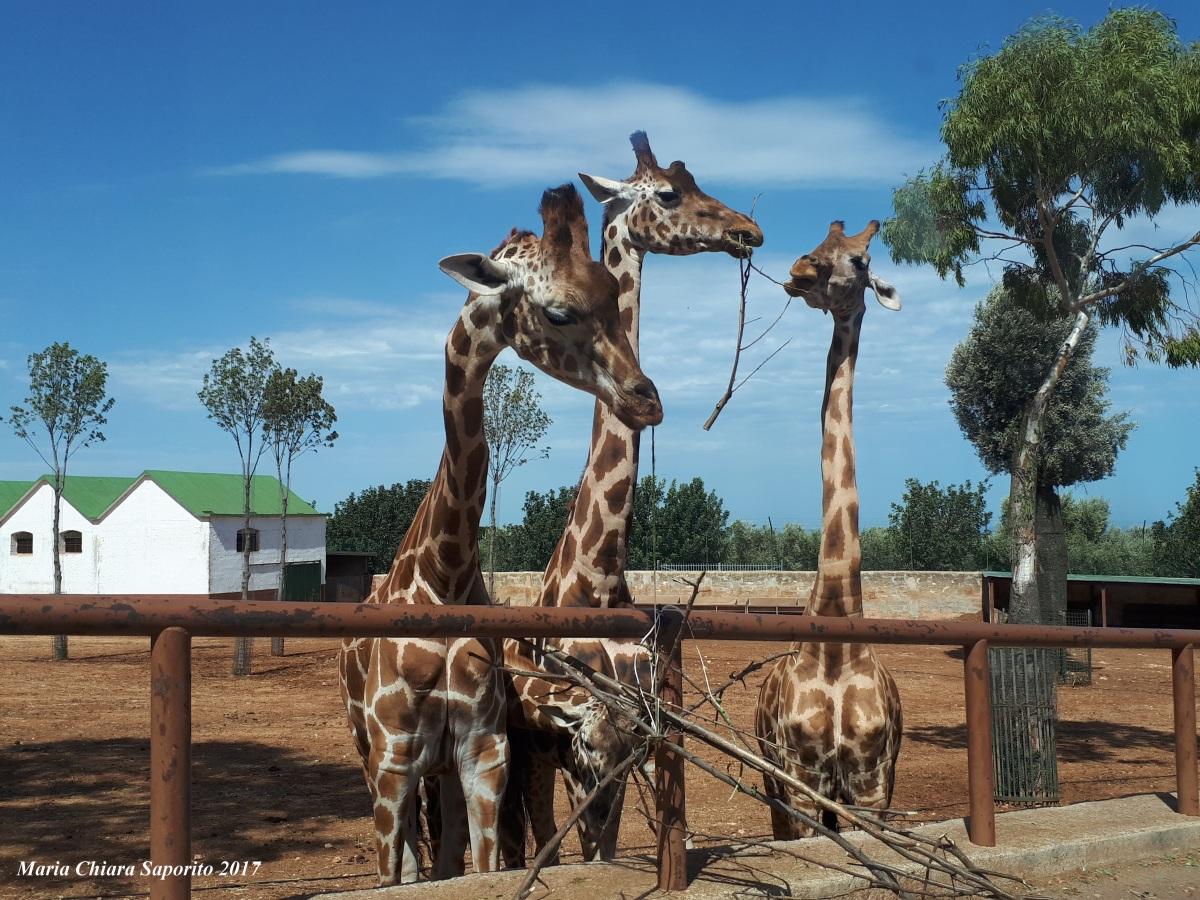Zoo Safari Fasano: l'esperienza che piace anche agliadulti