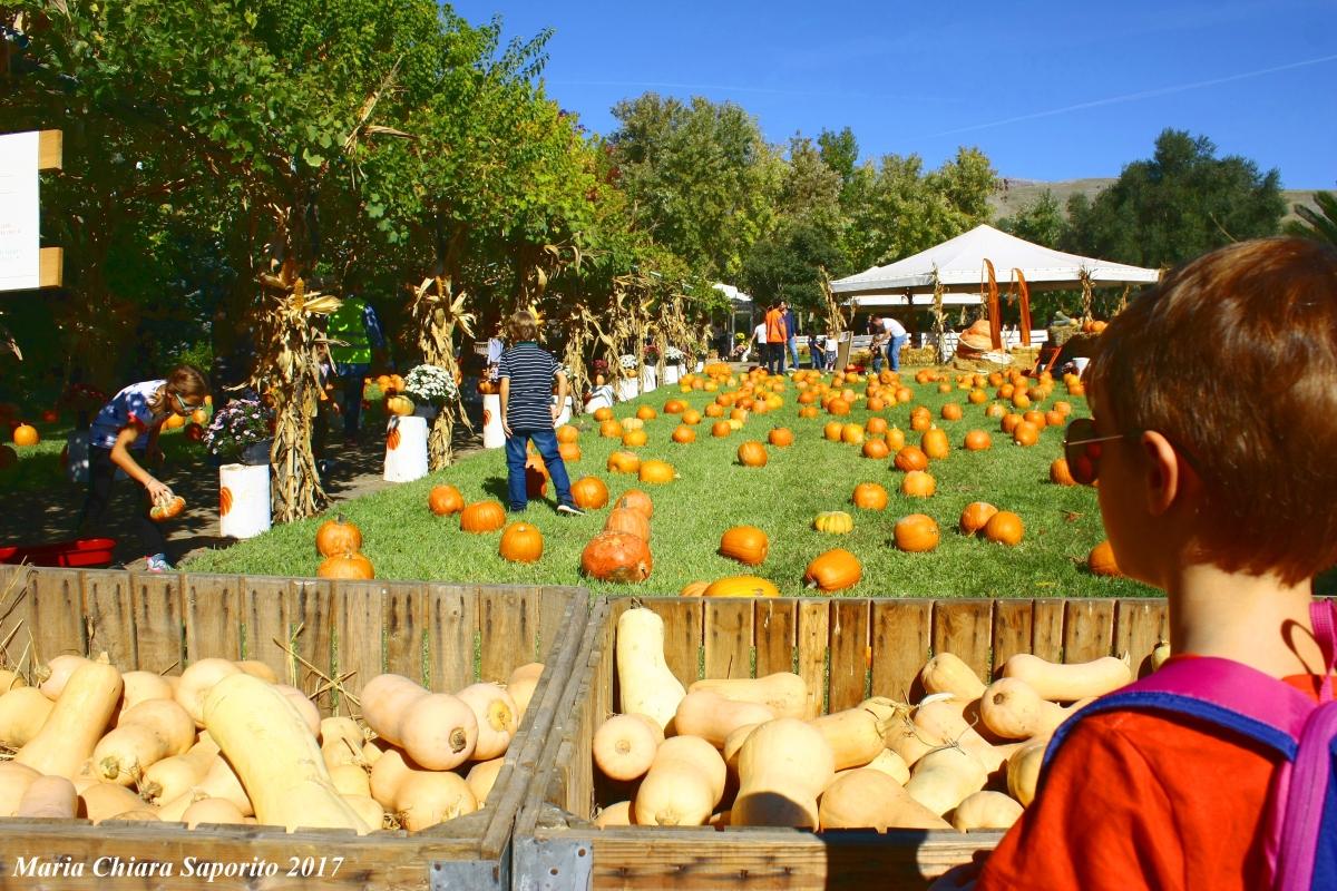 Il giardino delle zucche 2020: il primo Pumpkin Patch inItalia