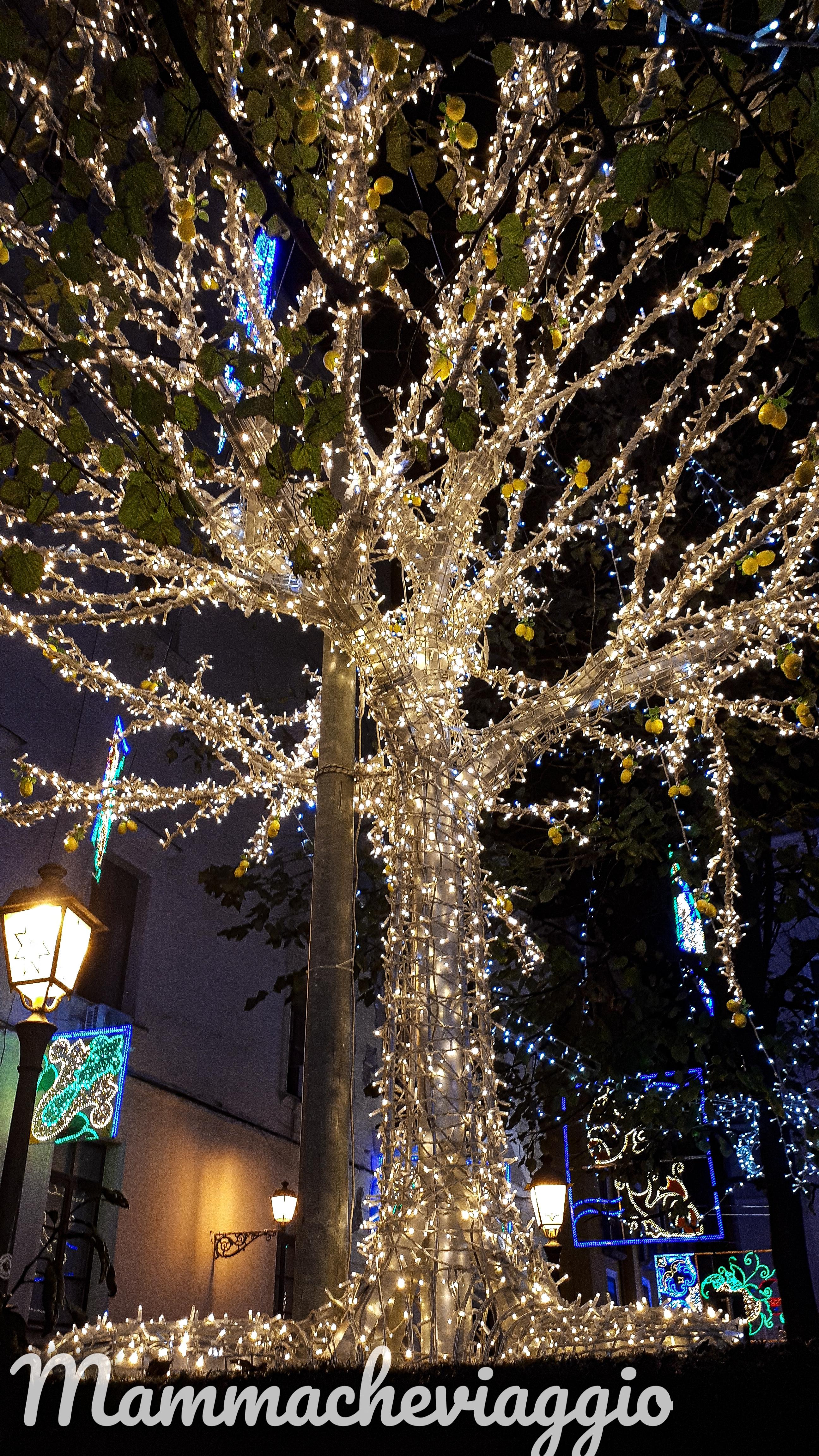 Photo_1573938041673.jpg