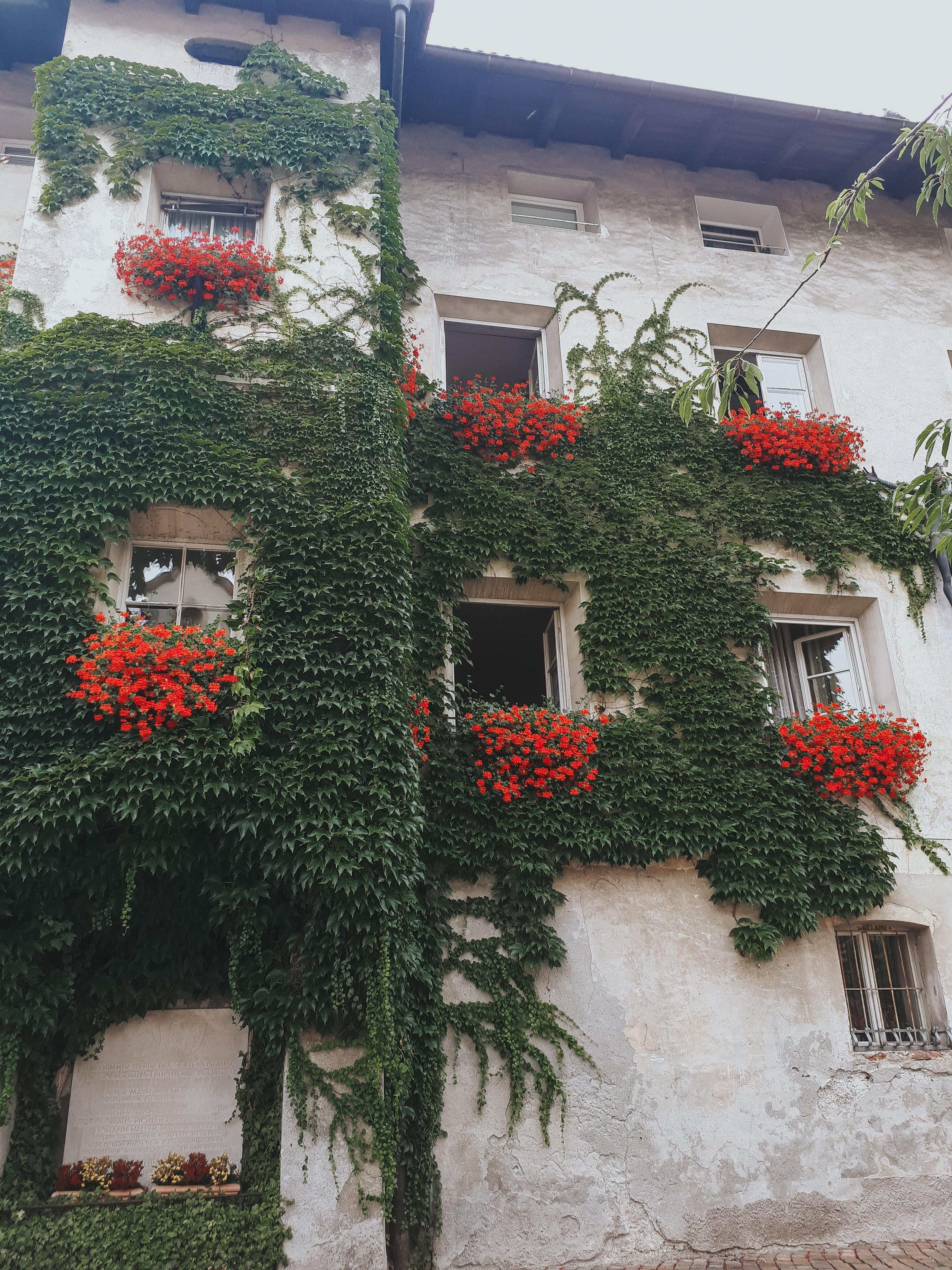 Bressanone cosa vedere: i palazzi storici di Piazza Duomo, tra finestre fiorate e rampicanti. Il verde esplode in città